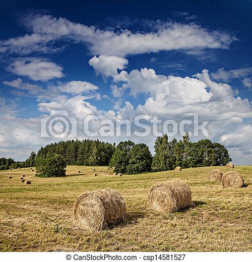 Big hay rolls on a beautiful field - csp14581527