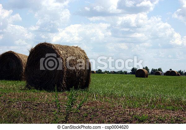 Big hay - csp0004620