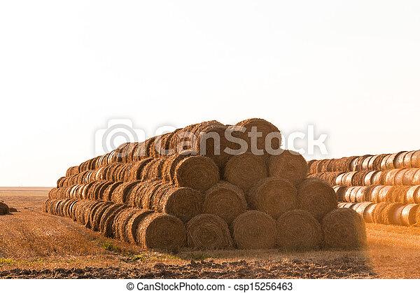 Big haystack at field - csp15256463