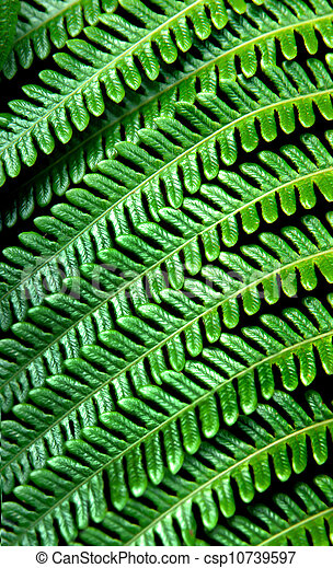 Big Island Fern - csp10739597
