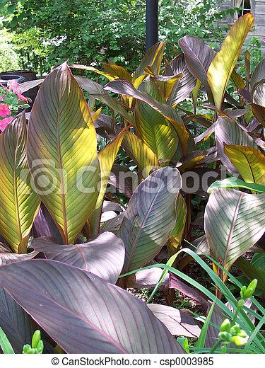 Big leaves - csp0003985