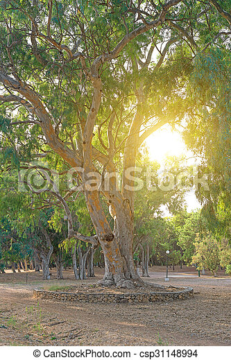 Big old tree in the park. - csp31148994