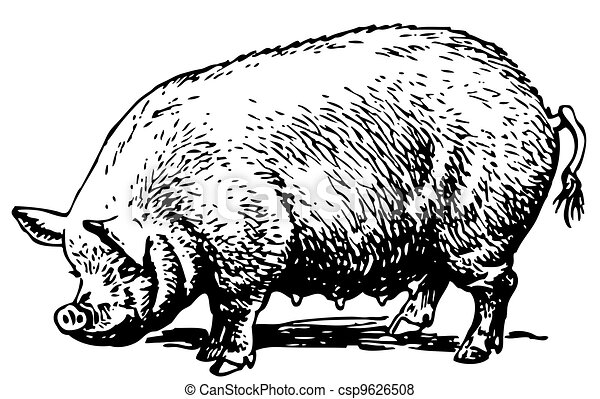 Big pig - csp9626508