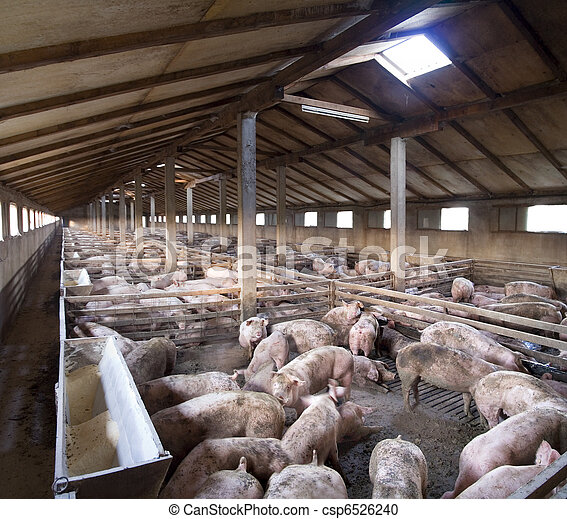 Big Pig farm - csp6526240