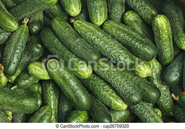 Big pile of fresh green cucumbers - csp26709320