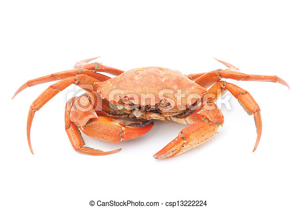 big red boiled crab isolated on white background - csp13222224