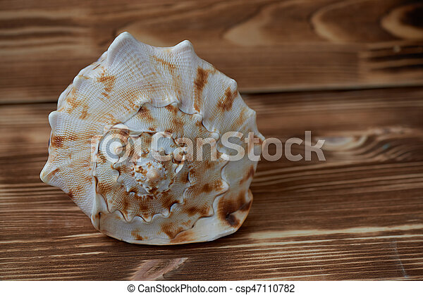 Big sea shell lying on the surface of the wooden aged background. close up - csp47110782