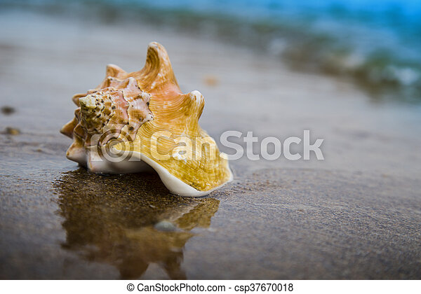 Big seashell on sand of the beach in sunlight, background, close up - csp37670018