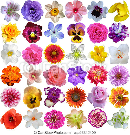 Various flowers free stock photos download (11,110 Free stock) Photos of various flowers