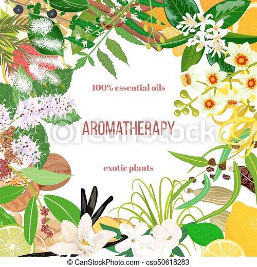 Big set of essential oil exotic plants. Ornament with text. Vanilla, cinnamon, jasmine, tea tree, bergamot, sandalwood, patchouli etc. - csp50618283