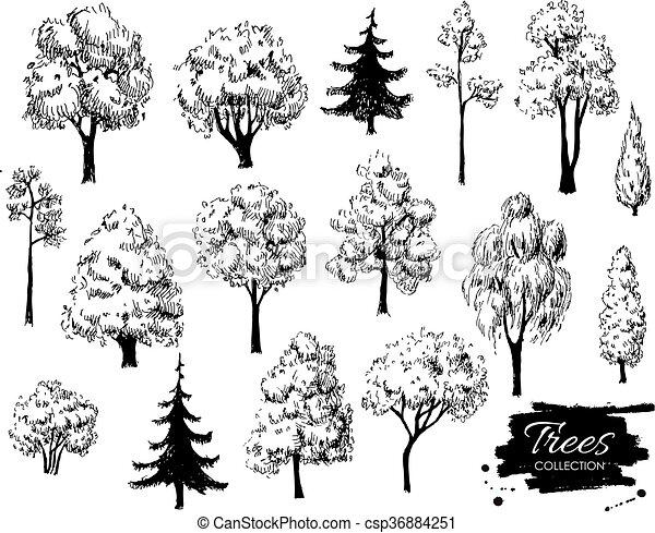 Big Set Of Hand Drawn Tree Sketches Artistic Drawing