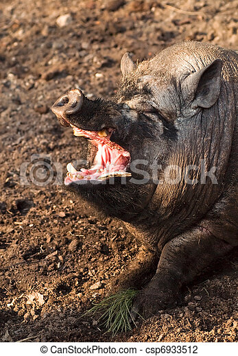 Big swine with open mouth - csp6933512