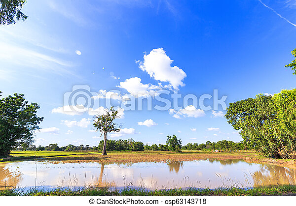 Big tree in little field near water and blue sky with cloud. - csp63143718