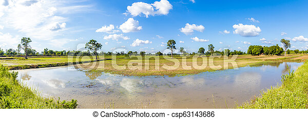Big tree in little field near water and blue sky with cloud. - csp63143686