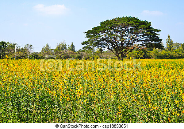 Big tree in the yellow flower farm - csp18833651