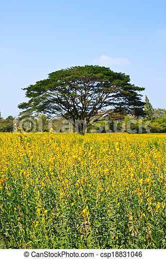 Big tree in the yellow flower farm - csp18831046