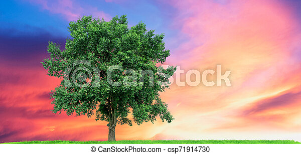 Big tree On the green meadow There is a backdrop in the blue sky and sunset, - csp71914730