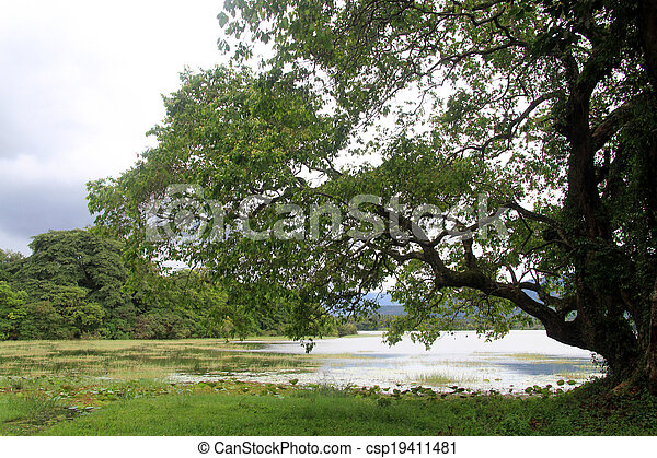 Big tree - csp19411481