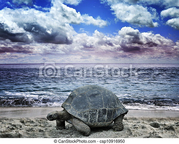 Big Turtle On The Ocean Beach - csp10916950
