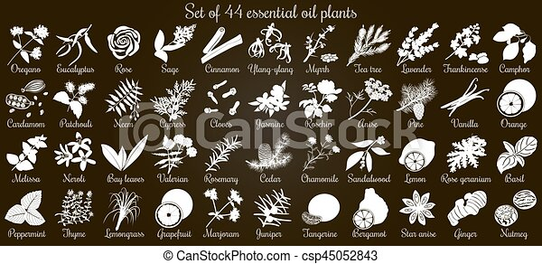 Big vector set of 44 flat style essential oil plants. White Silhouettes on black - csp45052843