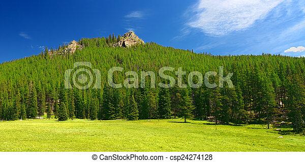 Bighorn National Forest Landscape Wyoming - csp24274128