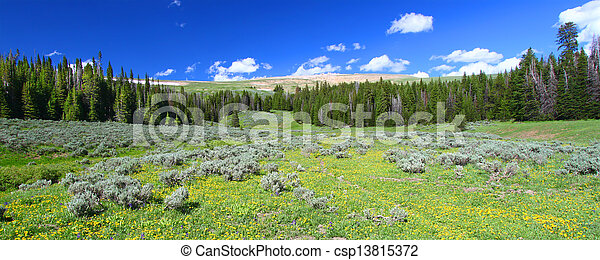 Bighorn National Forest Panoramic - csp13815372