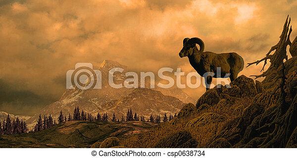 Bighorn Sheep - csp0638734