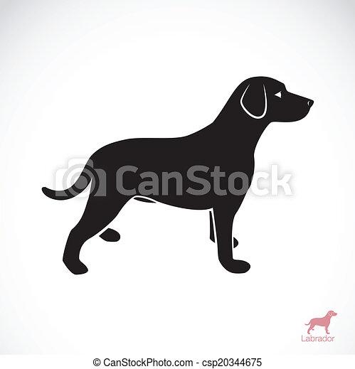 Vector Bild eines Hunde-Laboradors - csp20344675