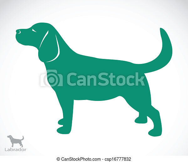bild, vektor, labrador, hund - csp16777832
