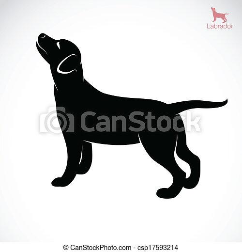 Vector Bild eines Hunde-Laboradors - csp17593214