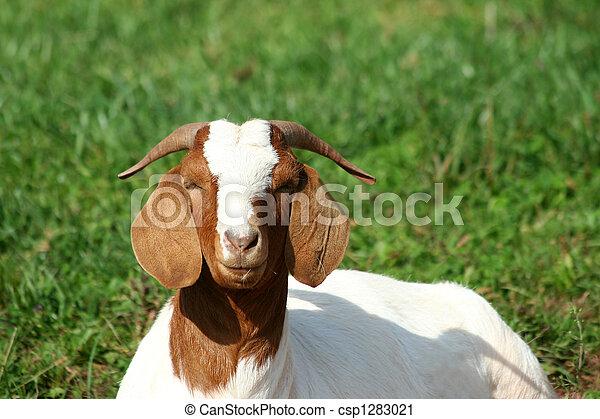 Billy goat - csp1283021