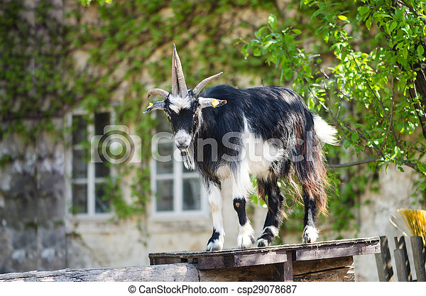 billy goat - csp29078687