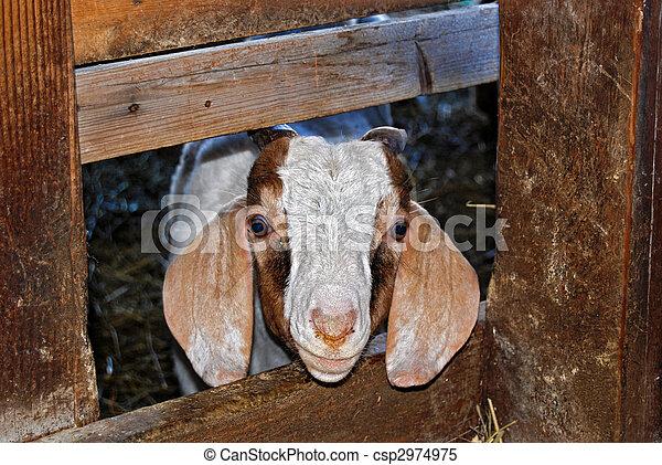 Billy Goat - csp2974975
