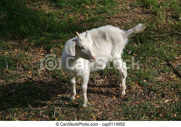 Billy Goat - csp0114952