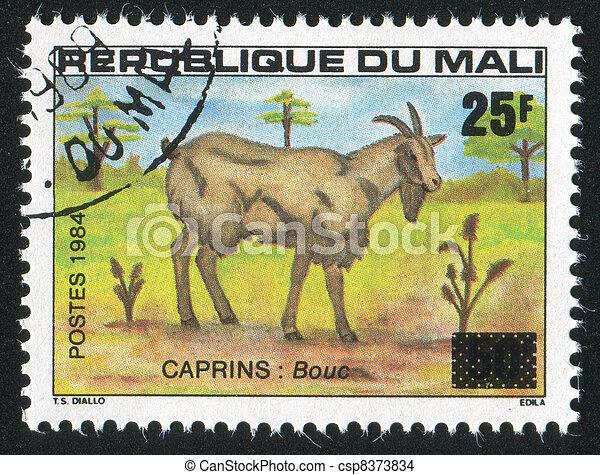 Billy goat - csp8373834