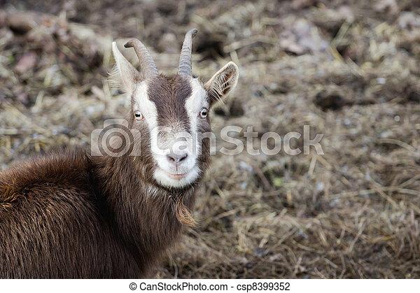 Billy goat - csp8399352