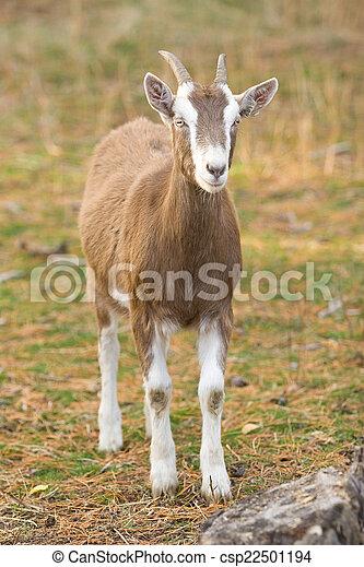 Billy Goat - csp22501194