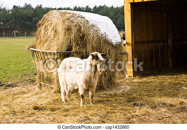 billy goat - csp1432660