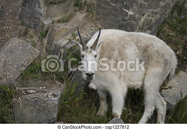 Billy Mt Goat - csp1227812