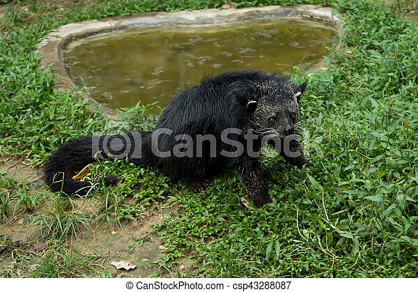 Bearcat Images And Stock Photos. 131 Bearcat Photography And Royalty Free  Pictures Available To Download From Thousands Of Stock Photo Providers.