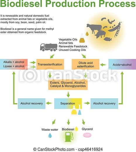 Biodiesel Production Process. - csp46416924