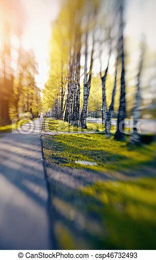 Birch avenue is lit with sunshine. - csp46732493