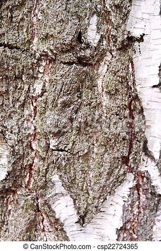 birch bark - csp22724365