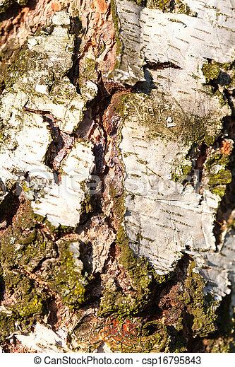 Birch Bark Texture coarse - csp16795843