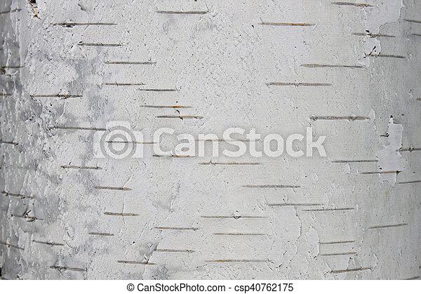 birch bark texture - csp40762175