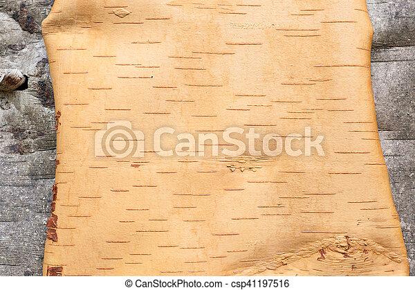 Birch bark texture - csp41197516