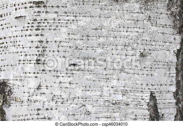 Birch bark texture - csp46034010