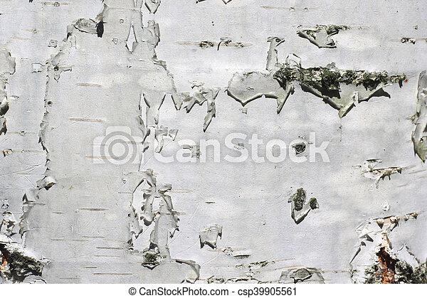 birch bark texture - csp39905561