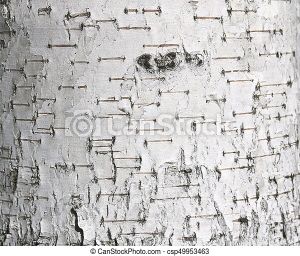 Birch bark texture - csp49953463