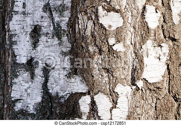 Birch bark texture - csp12172851